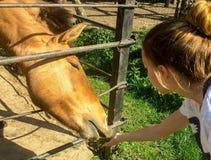 Kind und ein Pferd Stockfotos