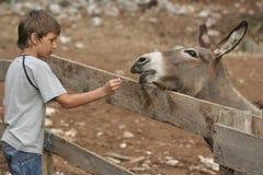 Kind und Esel Stockfotografie