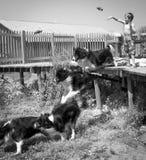 Kind und Hund, die Reichweite spielen stockfoto