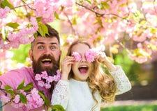 Kind und Mann mit zarten rosa Blumen im Bart Vater und Tochter auf glücklichem Gesicht spielen mit Blumen als Gläser, Kirschblüte Stockfotos