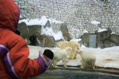 Kind und weiße Bären stockfotos