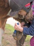 Kind verkratzt die Hufe des Pferds Lizenzfreie Stockbilder