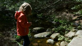 Kind vor Crystal Clear Stream in einem Wald stock video footage