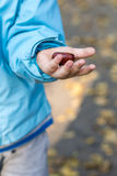 Kind zeigt Kastanie in seiner linken Hand Stockfoto