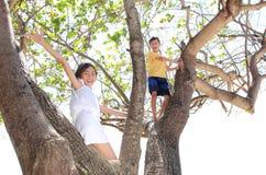 Kinder auf dem Baum stockbilder
