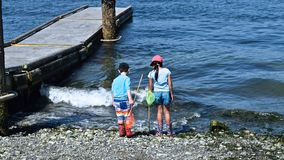 Kinder auf der Jagd für Meerestiere lizenzfreie stockfotos
