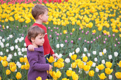 Kinder auf Feld der Tulpen Stockfoto