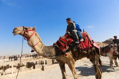 Kinder auf Kamel in Giseh-Pyramiden stockfotos