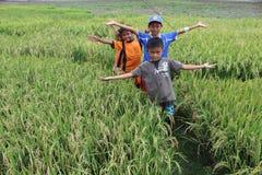 Kinder auf Reisfeld Stockbilder
