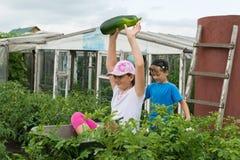 Kinder in der Gartenschubkarre draußen stockfoto