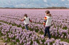 Kinder, die auf schönes Hyazinthefeld gehen Stockfotografie