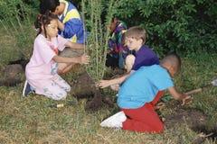 Kinder, die Bäume pflanzen lizenzfreie stockfotografie
