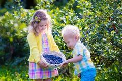 Kinder, die Blaubeere auswählen lizenzfreie stockfotografie