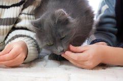 Kinder, die eine Katze speisen stockbild