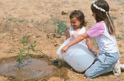 Kinder, die einen Schössling wässern Lizenzfreie Stockfotos