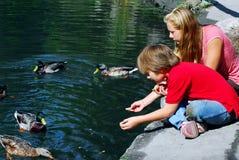 Kinder, die Enten speisen Stockbilder