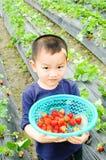 Kinder, die Erdbeere tragen Stockbilder