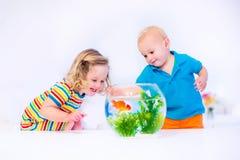 Kinder, die Fischschüssel aufpassen Stockbilder