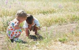 Kinder, die Heuschrecken im Gras abfangen lizenzfreies stockbild