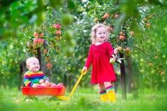 Kinder, die im Apfelgarten spielen Stockbild