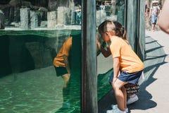 Kinder, die innerhalb des Aquariums in Prag-Zoo, Tschechische Republik schauen stockfotografie