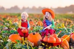 Kinder, die Kürbise auf Halloween-Kürbisflecken auswählen Stockfoto