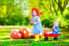 Kinder, die am Kürbisflecken spielen Stockbild