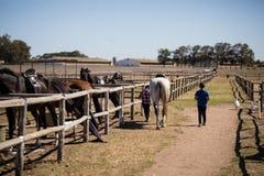 Kinder, die mit einem Schimmel in der Ranch gehen stockbilder
