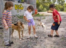 Kinder, die mit Hunden spielen Stockfotos