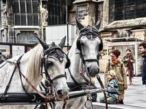 Kinder, die mit Pferden in Stephansplatz spielen stockfotos