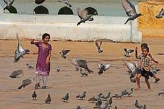 Kinder, die mit Taube spielen Stockfotografie