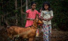 Kinder, die mit Ziege in der Natur spielen Stockfotos