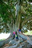 Kinder, die sehr großen Baum steigen Stockfotografie
