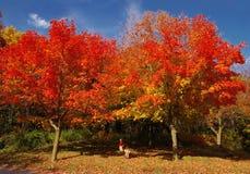 Kinder, die unter den roten Bäumen spielen Stockbilder