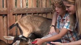 Kinder, die Ziegen am Bauernhof einziehen stock footage