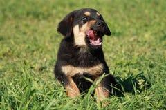 Kinder dog. Royalty Free Stock Image