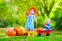 Kinder am Halloween-Kürbisflecken Stockfotos