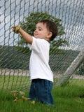 Kinder: Junge, der mit Blättern spielt Stockbild