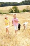 Kinder mit den Hunden, die durch Sommer Harveste laufen Stockfotos