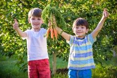 Kinder mit einer Karotte im Garten Zwei Jungen mit Gem?se im Bauernhof lizenzfreie stockfotos