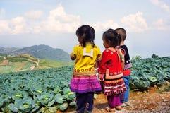 Kinder mit Kohlpflanzen Stockfotos