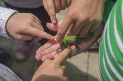 Kinder studieren eine kleine Eidechse Stockbilder