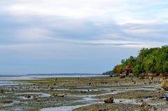 Kinder suchen nach Seeoberteilen während einer Ebbe Lizenzfreies Stockfoto