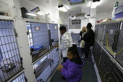 Kinder suchen neuen Begleiter lizenzfreie stockfotografie