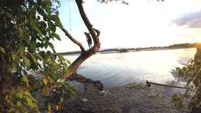 Kinder tauchen in Seewasser vom Baum stock video footage