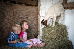 Kinder und Fotobombe der wild lebenden Tiere Stockfotografie