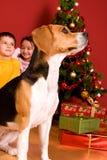 Kinder und Hund, die durch Weihnachtsbaum sitzen Stockbild