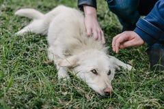 Kinderanschlag aWhite Hund Stockbild
