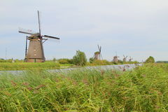 kinderdijk Obrazy Royalty Free