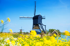 Kinderdijk, Netherlands at spring with flowers Stock Images
